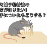 ネズミ捕り粘着液の取り方が知りたい!服や手についたらどうする?