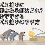 ネズミ捕りに効果のある餌はどれ?自分でできるネズミ捕りのやり方