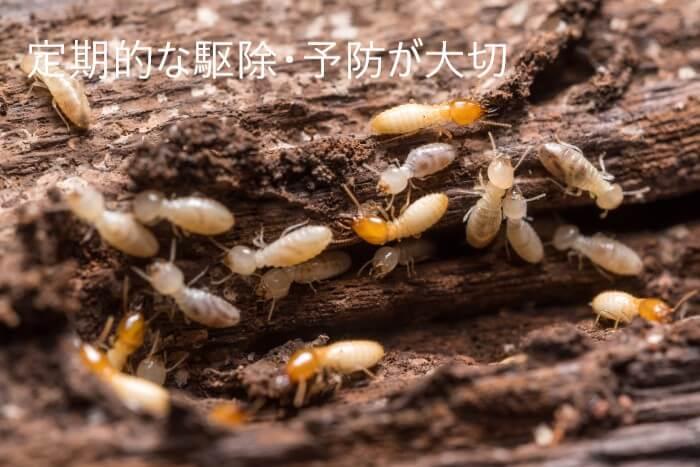 シロアリに侵食されている木材