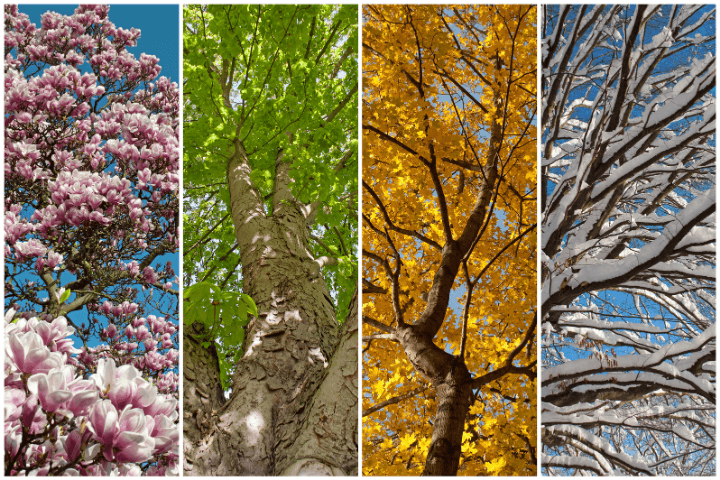 季節ごとの木の画像