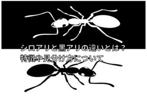 白と黒のアリの写真